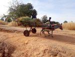Mali : le 8 mars ne se fête pas au village