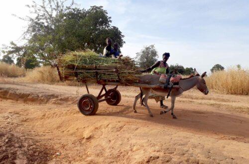 Article : Mali : le 8 mars ne se fête pas au village